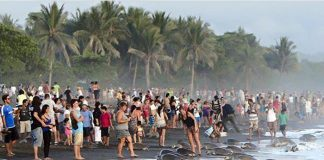 Crowds at Ostional Beach