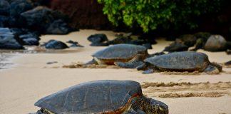 Turtles on beach. Photo by Joe Cook on Unsplash